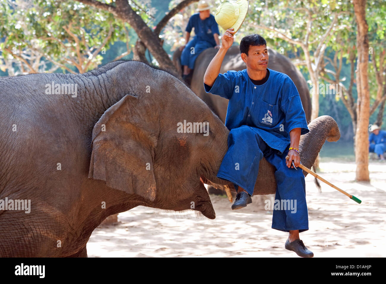 A mahout sitting on his elephant's trunk, Lampang, Thailand - Stock Image