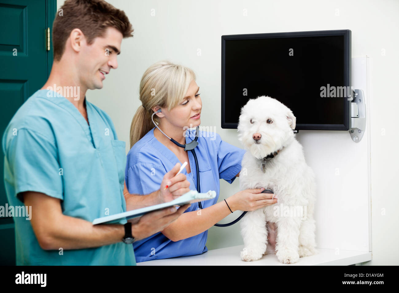 Veterinarian Doctors Examining A Dog At Clinic - Stock Image