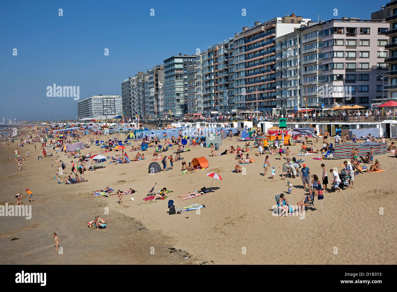 Sunbathers in summer sunning behind screens and windbreaks on beach along the North Sea coast at Belgian seaside - Stock Image