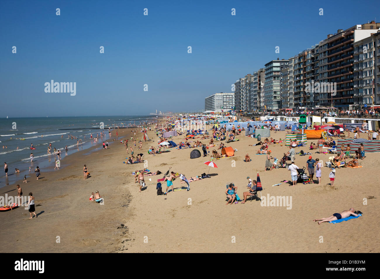 Sunbathers in summer sunbathing behind windbreaks on beach along the North Sea coast at Belgian seaside resort, - Stock Image