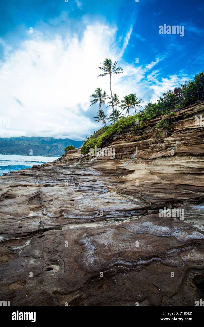 Sea Wall, Palm Tree, Hawaii, Oahu, Honolulu, Ocean Landscape, Scenic - Stock Image