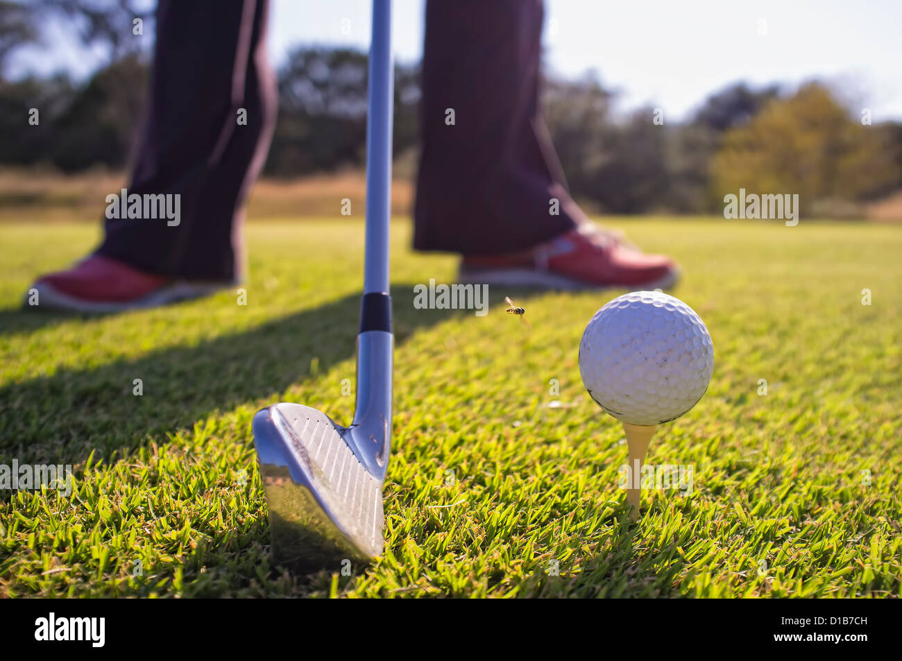 Golf ball on a tee, flying insect approaching - Stock Image