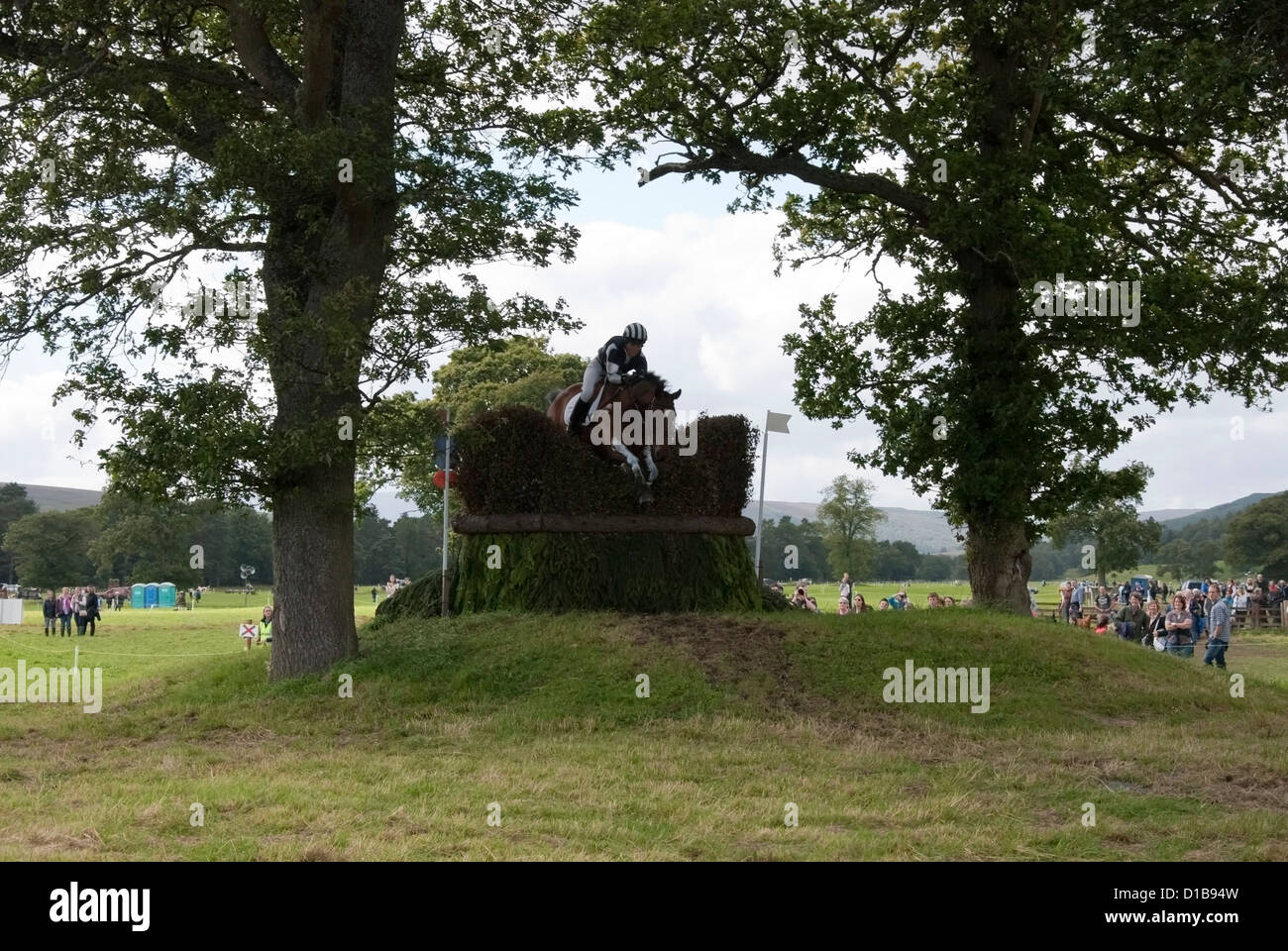 Female Rider Jumping a Brush Fence on a Bay Horse - Stock Image