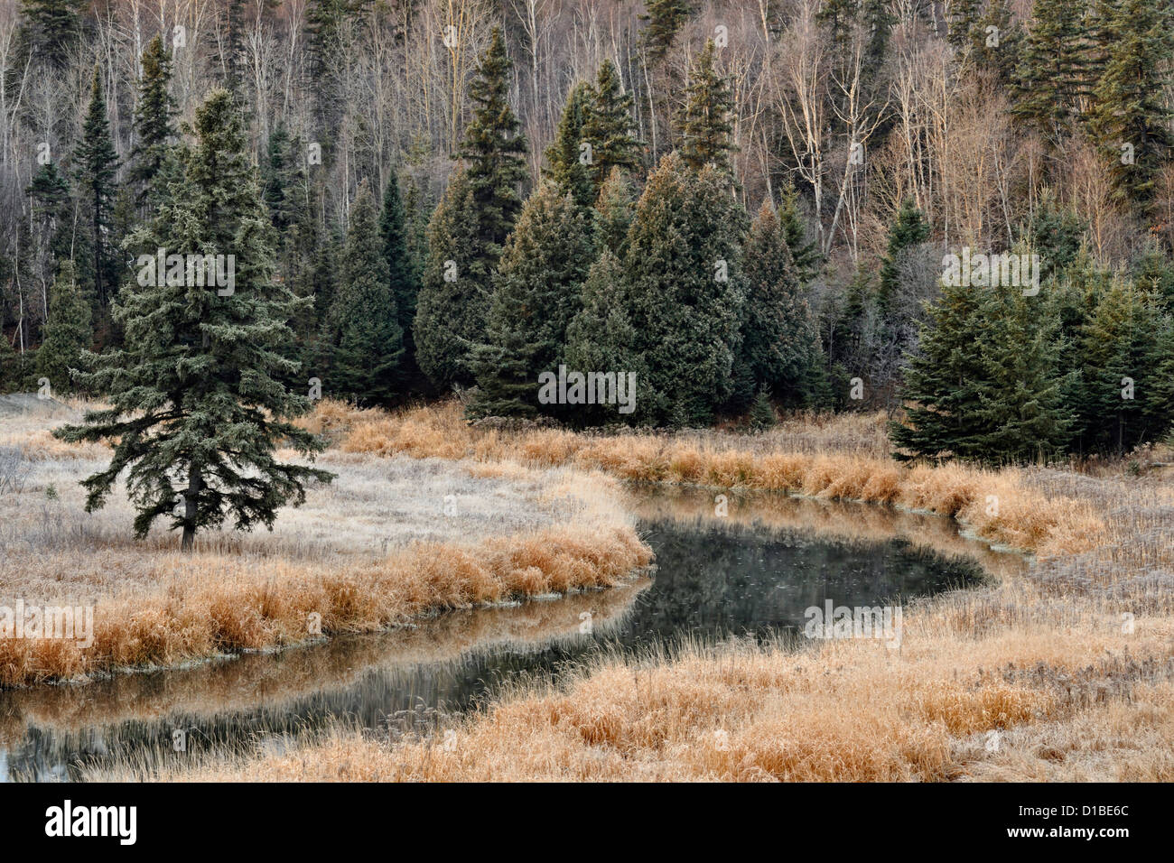 Frosted grasses in late autumn on the banks of Junction Creek, Greater Sudbury, Ontario, Canada - Stock Image