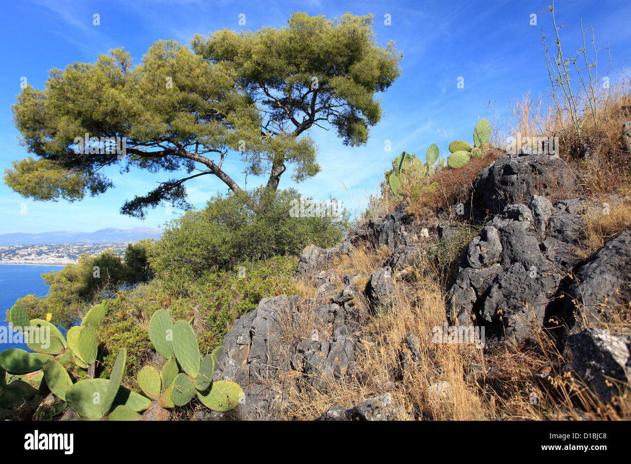 The natural park of Mont Boron in Nice city Stock Photo
