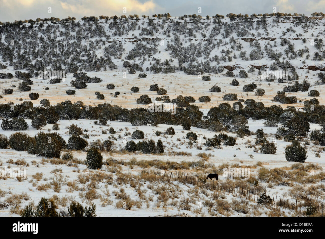 A dusting of snow in the Cibola National Forest, with grazing horse, near Mountainair, New Mexico, USA Stock Photo