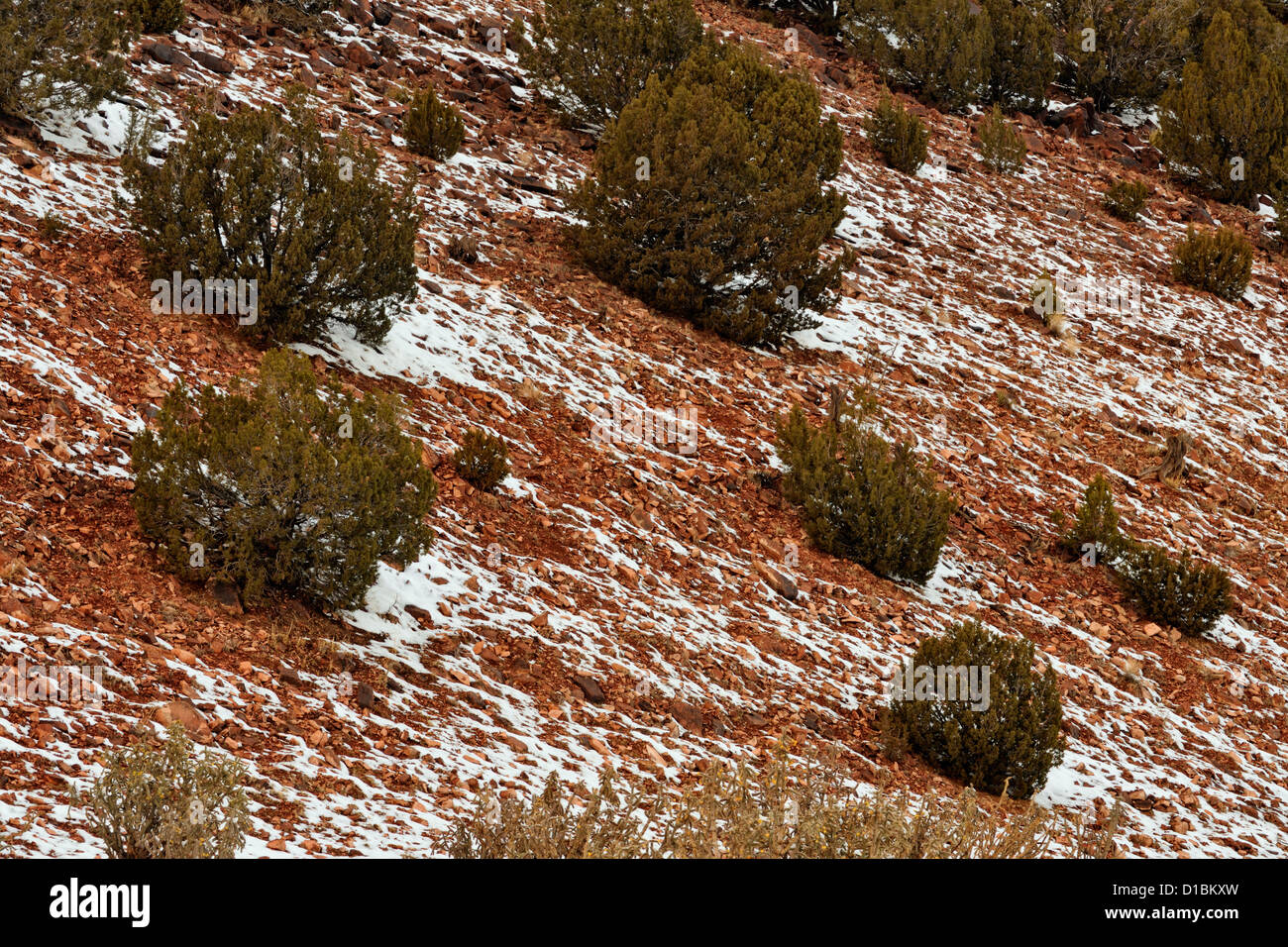 A dusting of snow in the Cibola National Forest, near Mountainair, New Mexico, USA Stock Photo