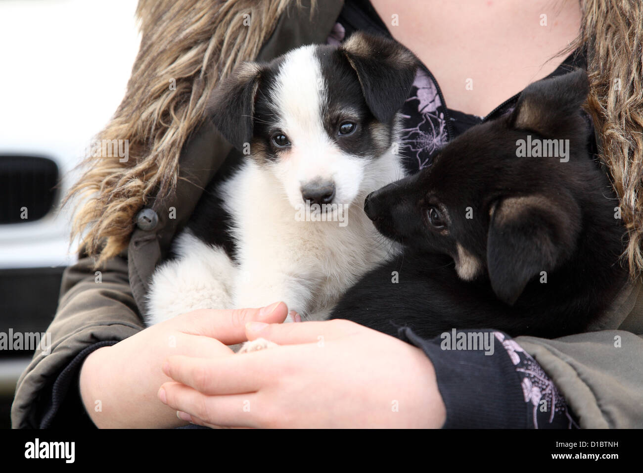 Dallgow-Doeberitz, Germany, dog puppies in the waiting room of a veterinary practice - Stock Image