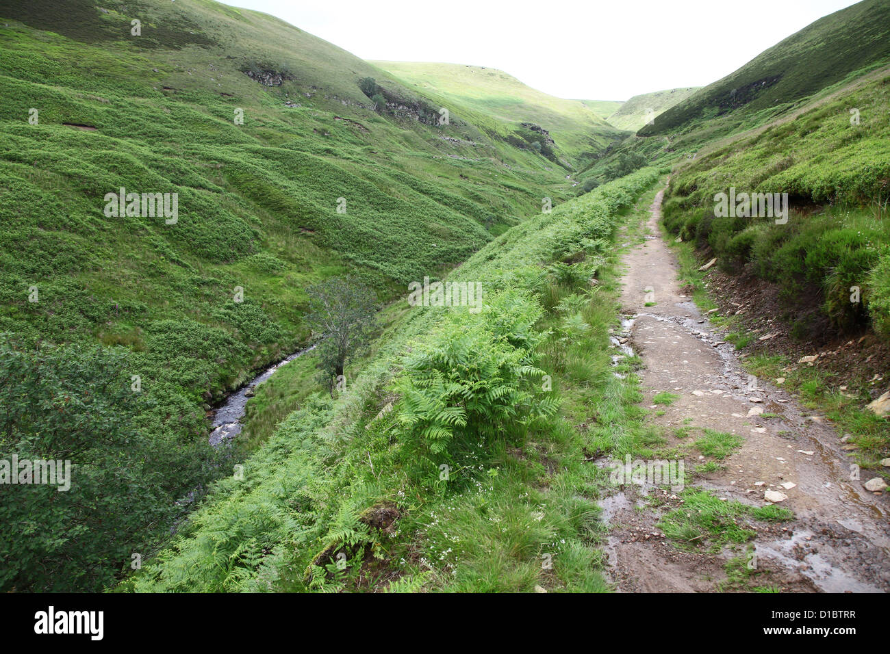 A footpath at Abbey Brook Little Howden Moor on the High Peak Estate Derbyshire dark Peak District National Park - Stock Image