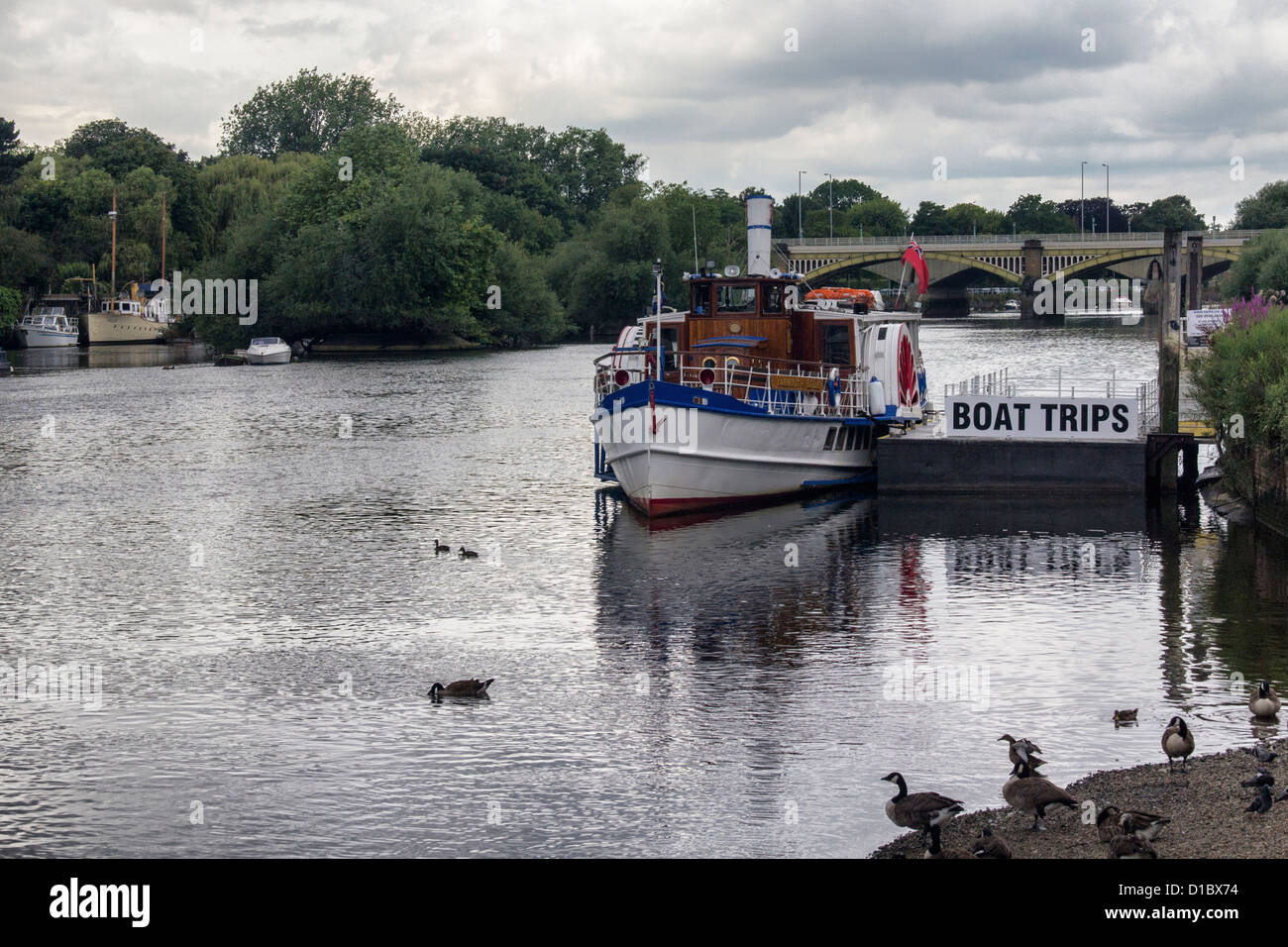 Turks Launches runs boat trips on the River Thames in Summer - Richmond upon TRichmond, Surrey, Greater London, - Stock Image