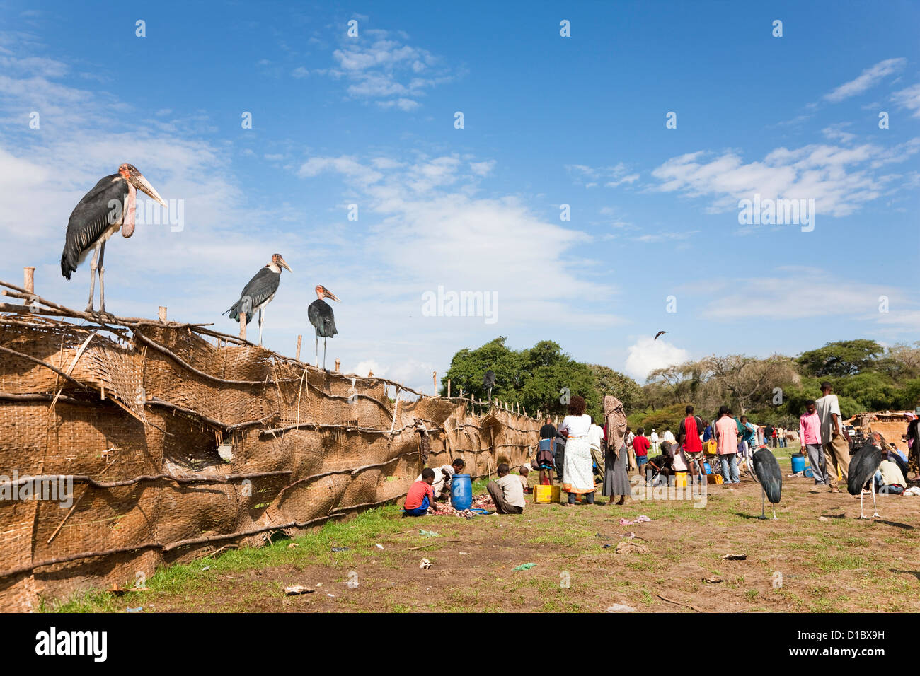 Marabou Storks at the fish market in Awasa, are waiting for refuse and bycatch. Africa, Ethiopia - Stock Image