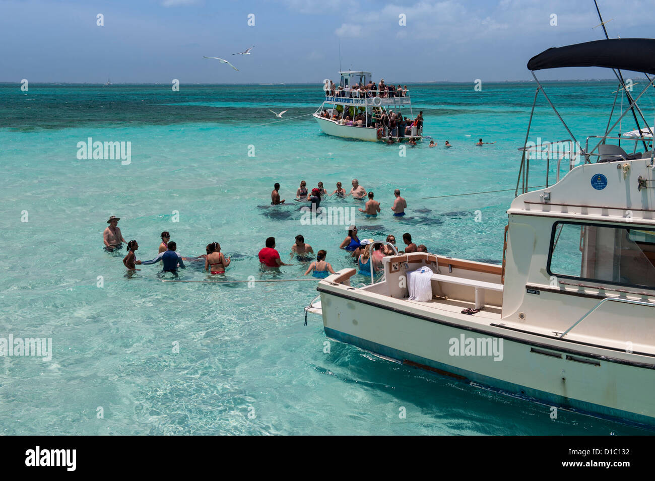 British West Indies, Cayman Islands, Grand Cayman, Stingray City - Stock Image