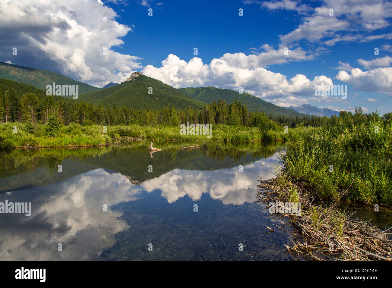 Beaver pond along the Flathead River near Fernie, British Columbia, Canada - Stock Image