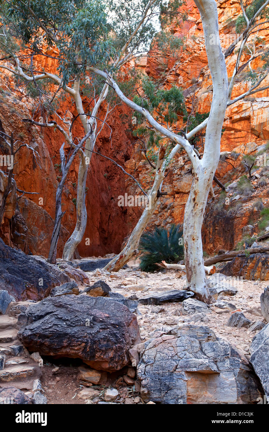 Stanley Chasm MacDonnell Ranges - Stock Image