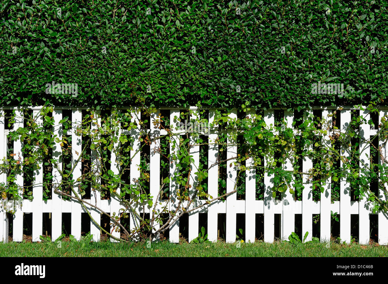 White picket fence, New England, USA - Stock Image