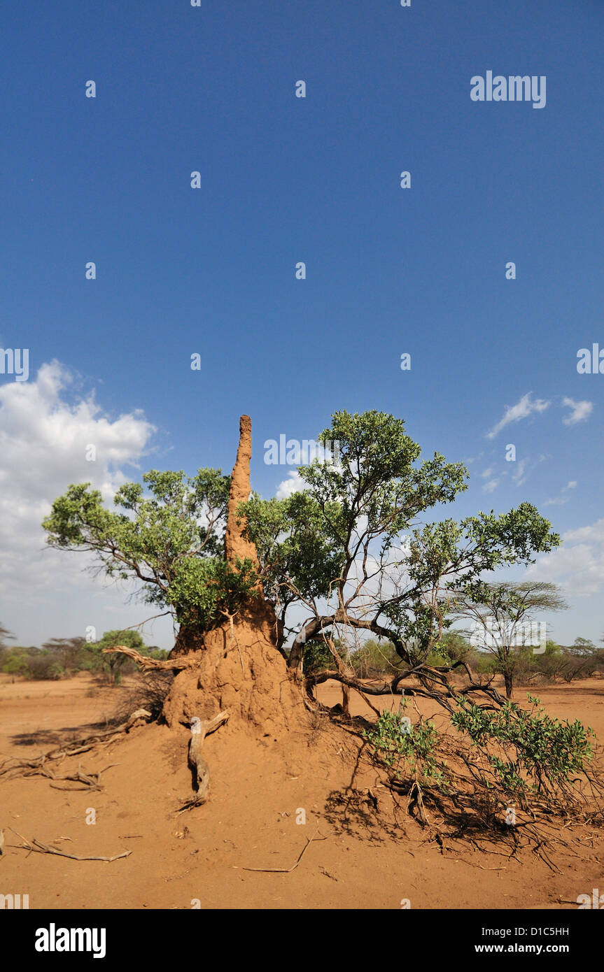 Termites' nest, Karo tribe land, Omo River Valley, Ethiopia, Africa Stock Photo