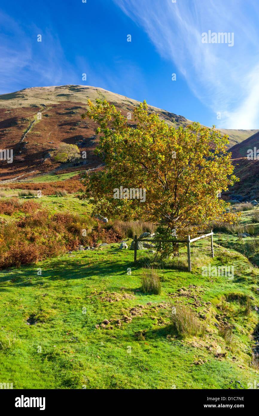 Hartsop Dodd, Lake District National Park. - Stock Image