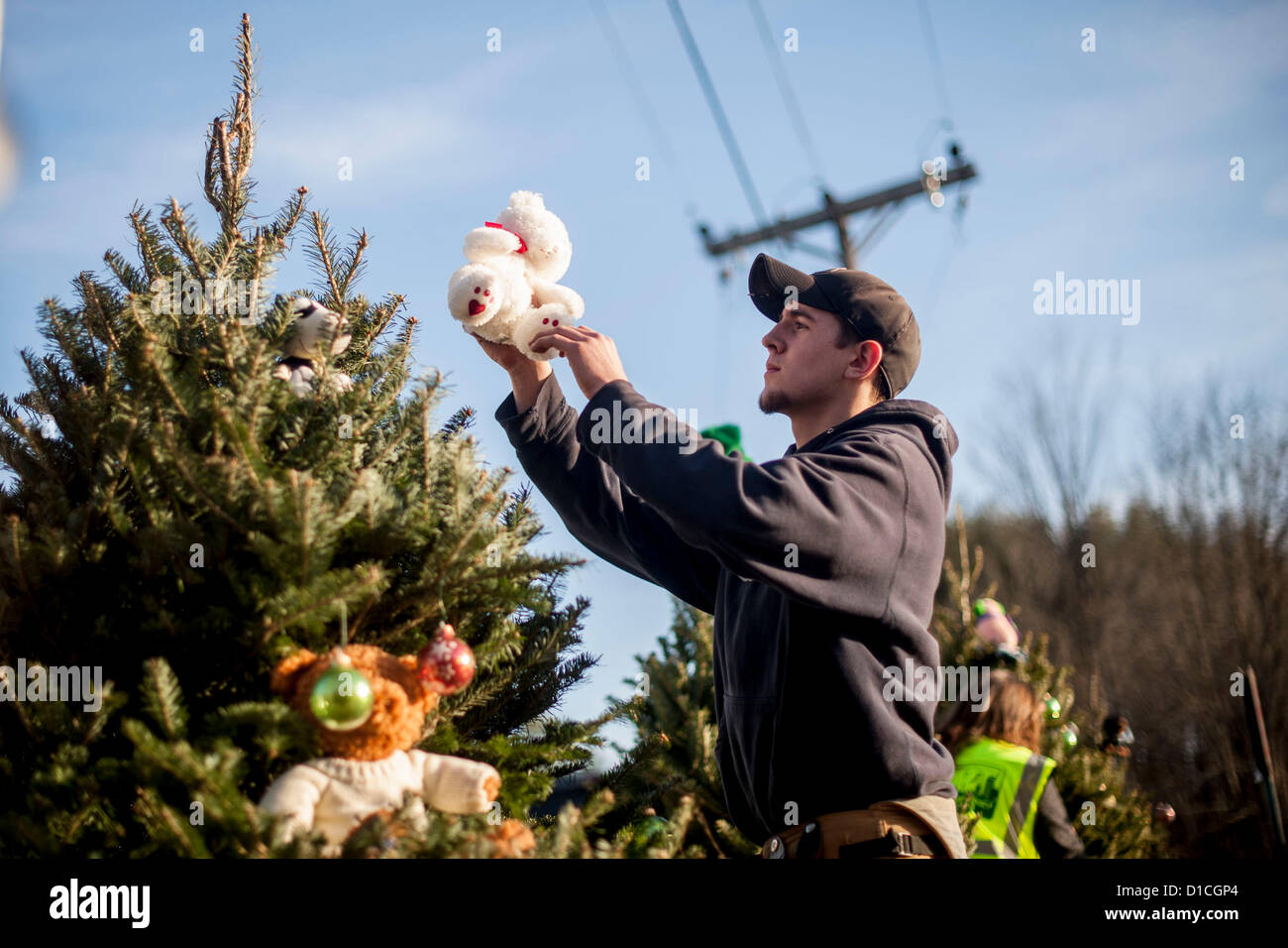 Newtown, CT, USA. 15th Dec, 2012. A Sandy Hook Volunteer Fire Department member places a bear on one of 20 Christmas - Stock Image