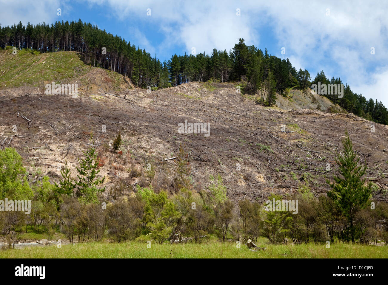 Silviculture. Hillside Harvested of Trees. East Cape, North island, New Zealand, from Highway 35. - Stock Image