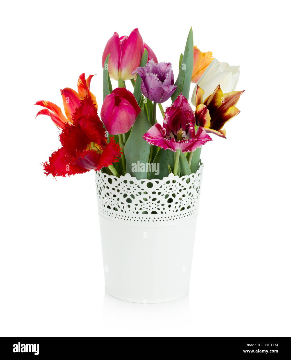 Multi colored tulips in flowerpot. Isolated on white background - Stock Image