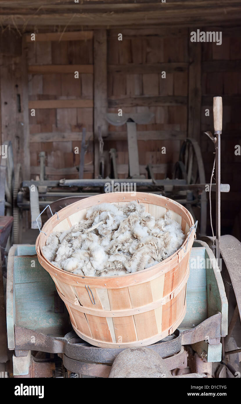 A basket of wool just sheared from the sheep. This is known as 'Greasy Wool' or 'Wool in the Grease'. - Stock Image