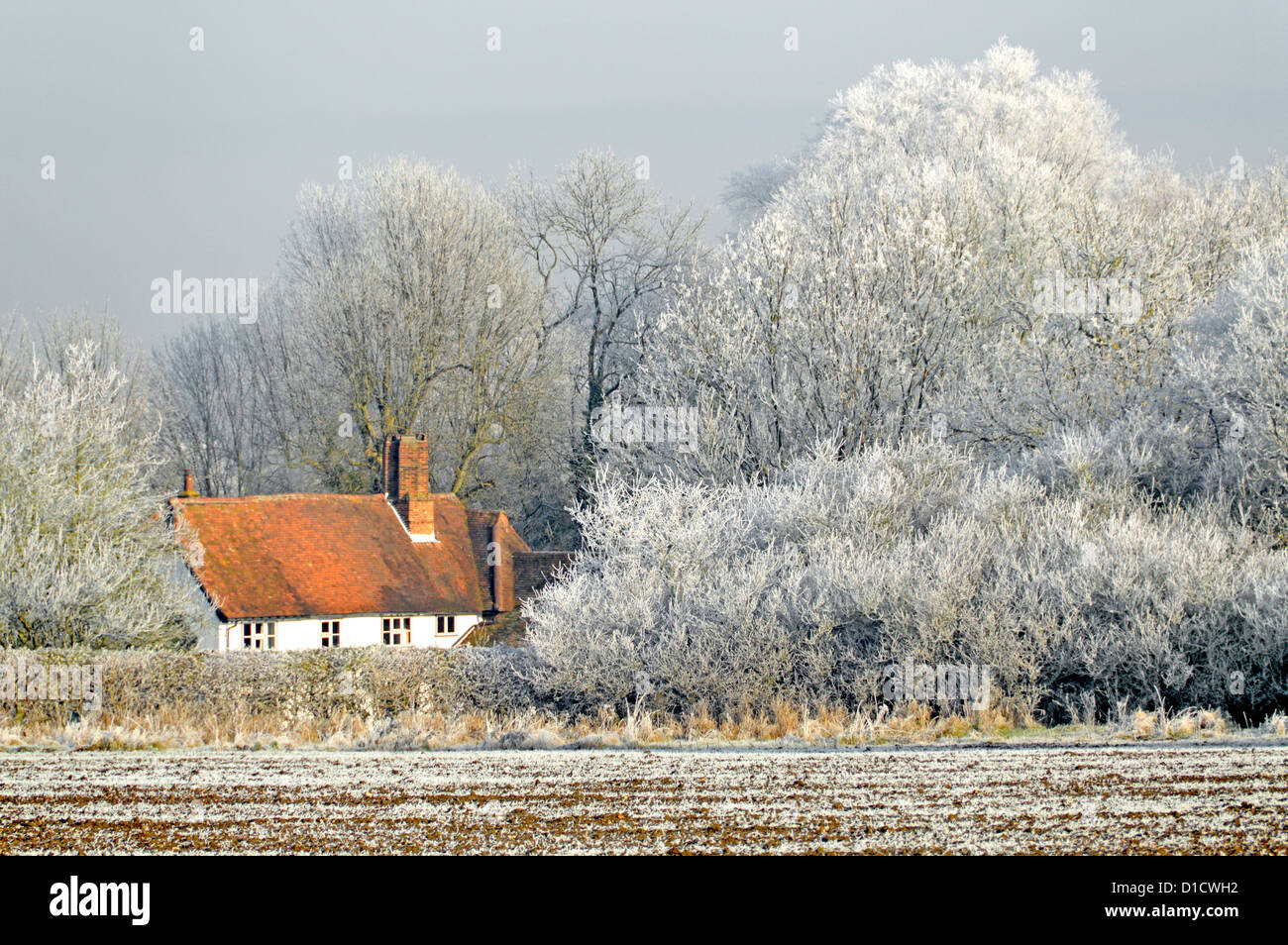 Essex country cottage in winter wonderland of trees covered in hoar frost, no snowfall - Stock Image
