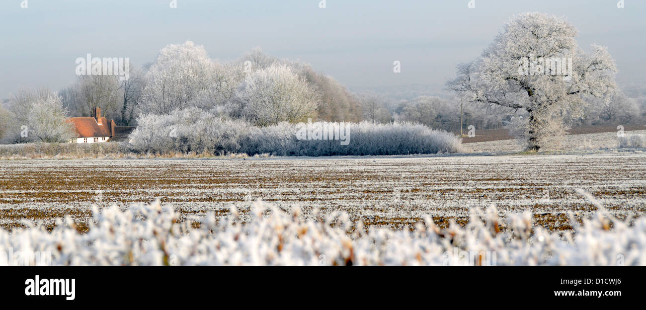 Country cottage in winter wonderland of trees covered in hoar frost, no snowfall - Stock Image