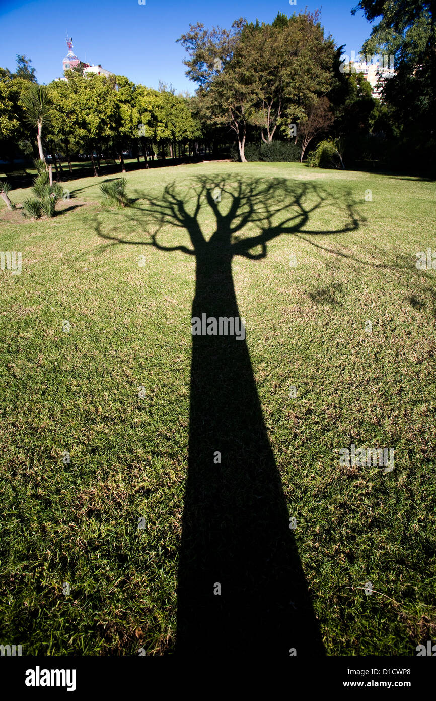 Seville, Spain, the shadow of a leafless tree Stock Photo