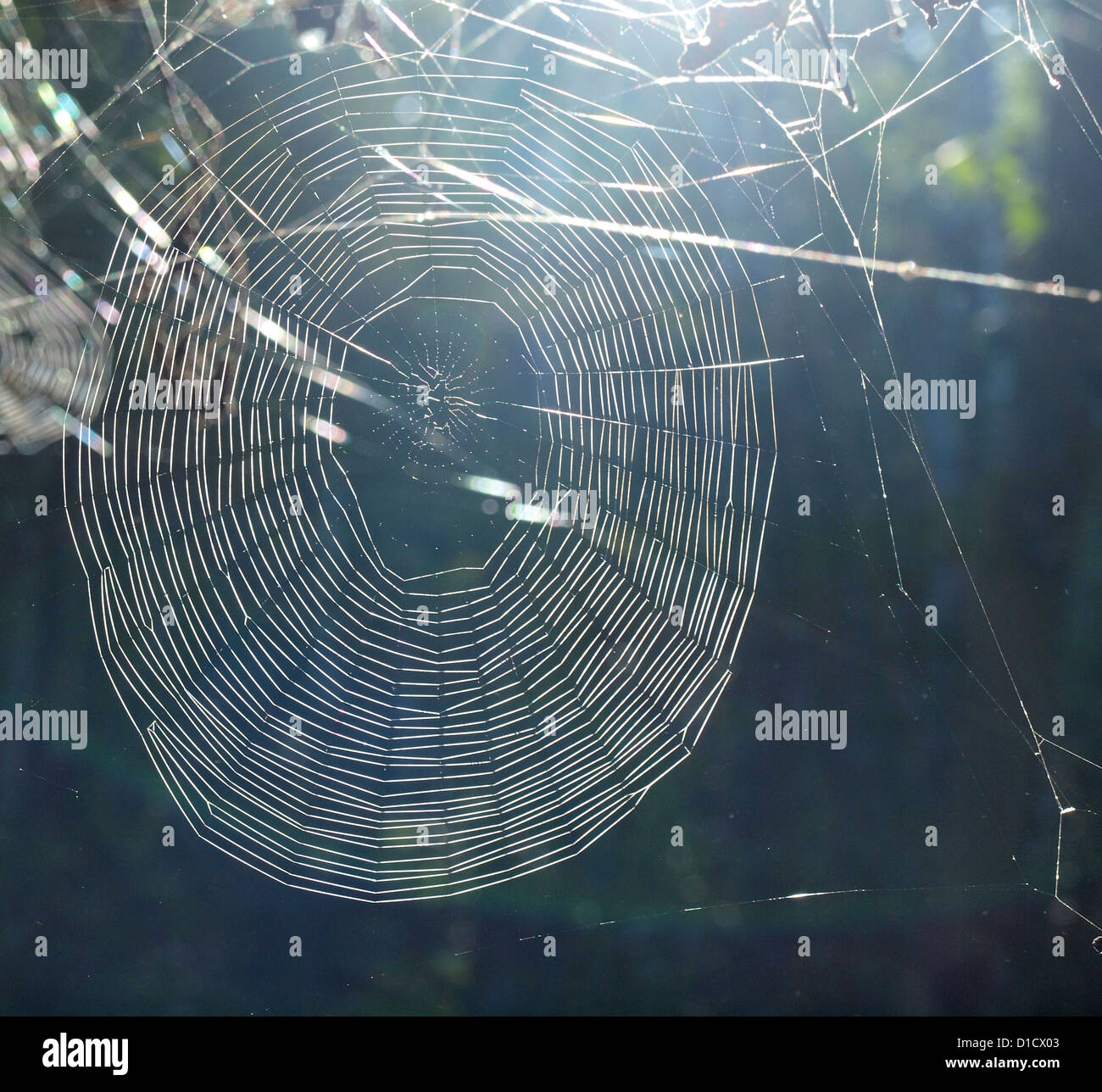 Spider Web in Sunshine - Stock Image