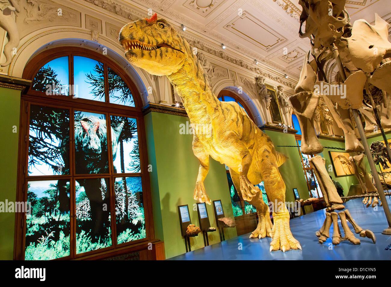 Austria, Vienna, Natural  History Museum - Stock Image