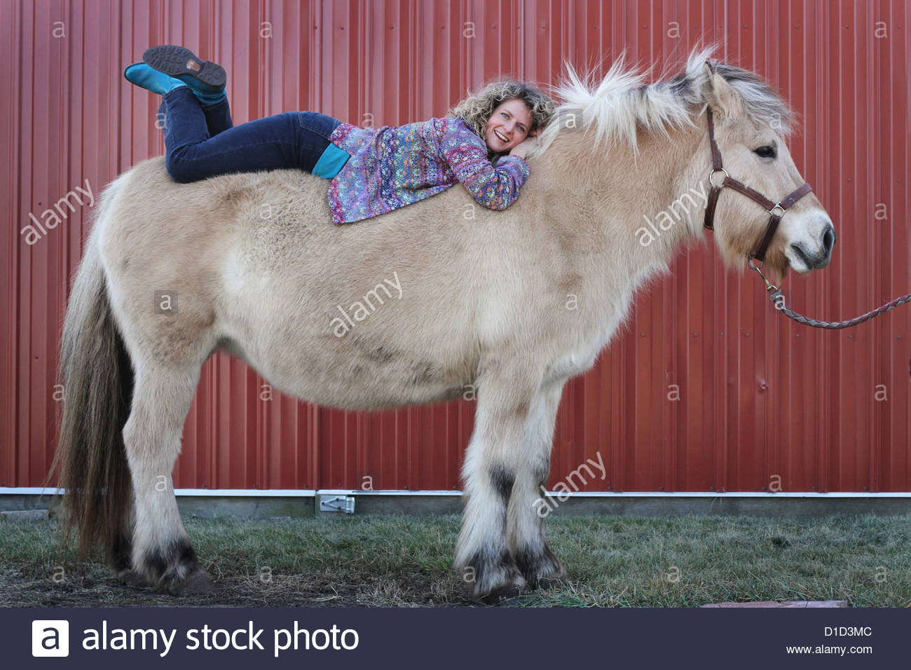 A woman lying down on a draft horse. - Stock Image