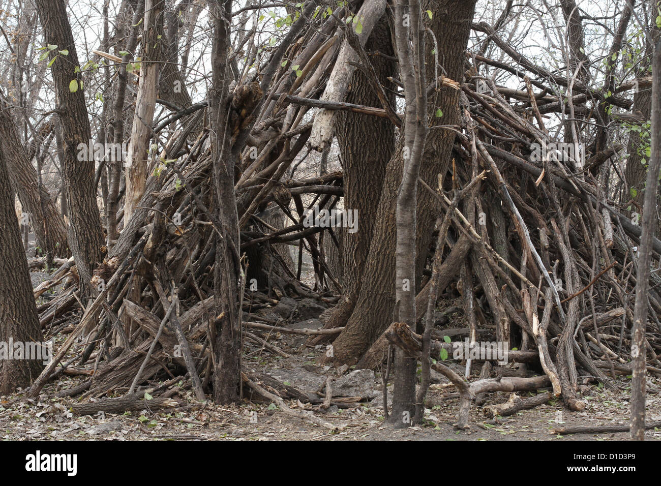 A fort in the woods made of sticks and branches. - Stock Image