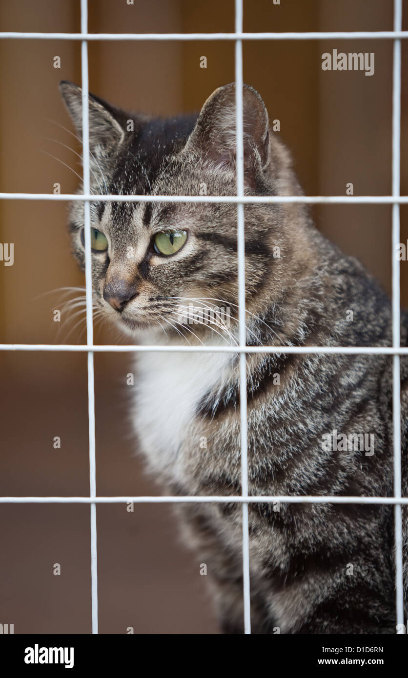 Cat shelter - Stock Image