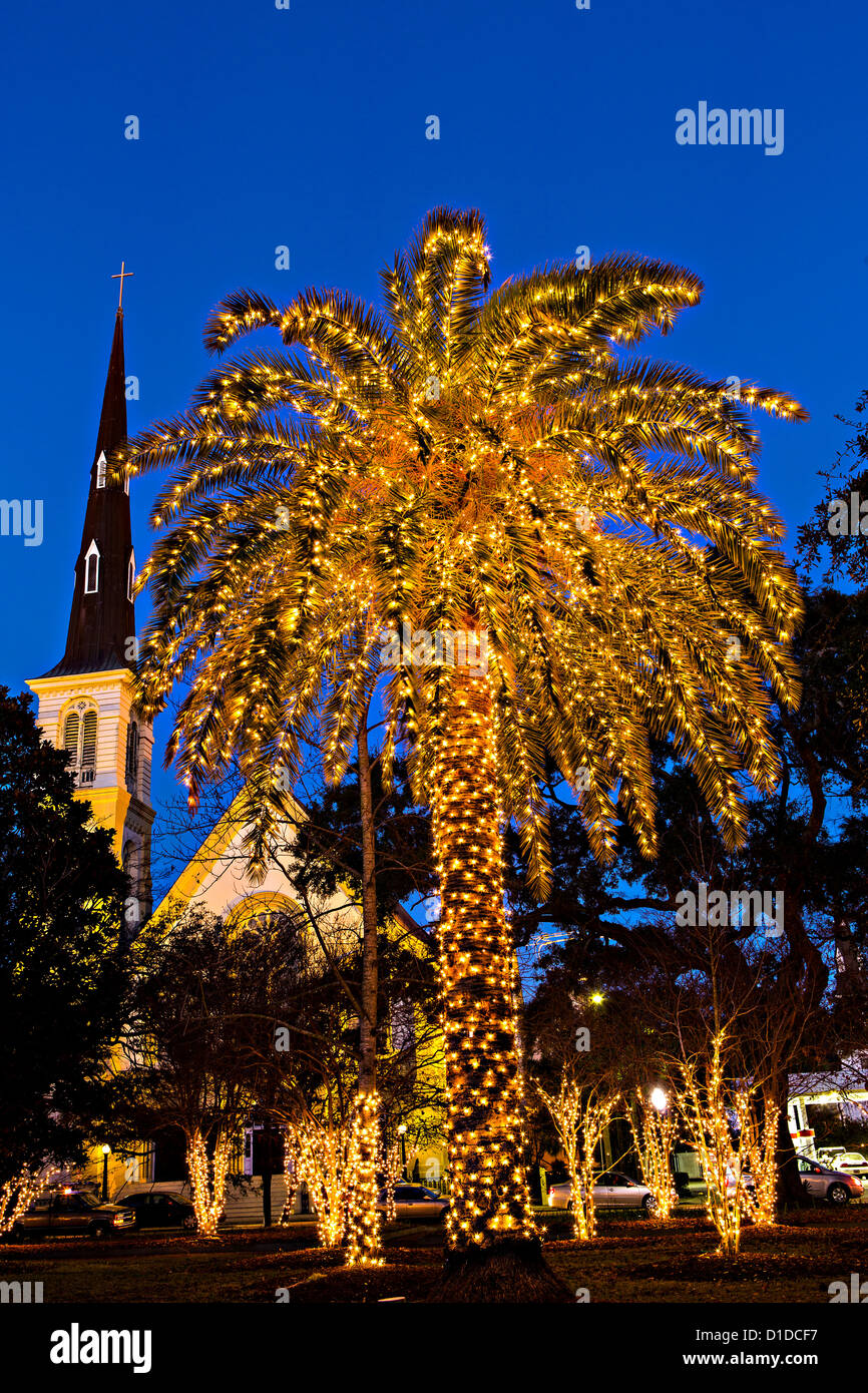 palm tree covered in fairy lights for christmas in historic marion square in charleston south
