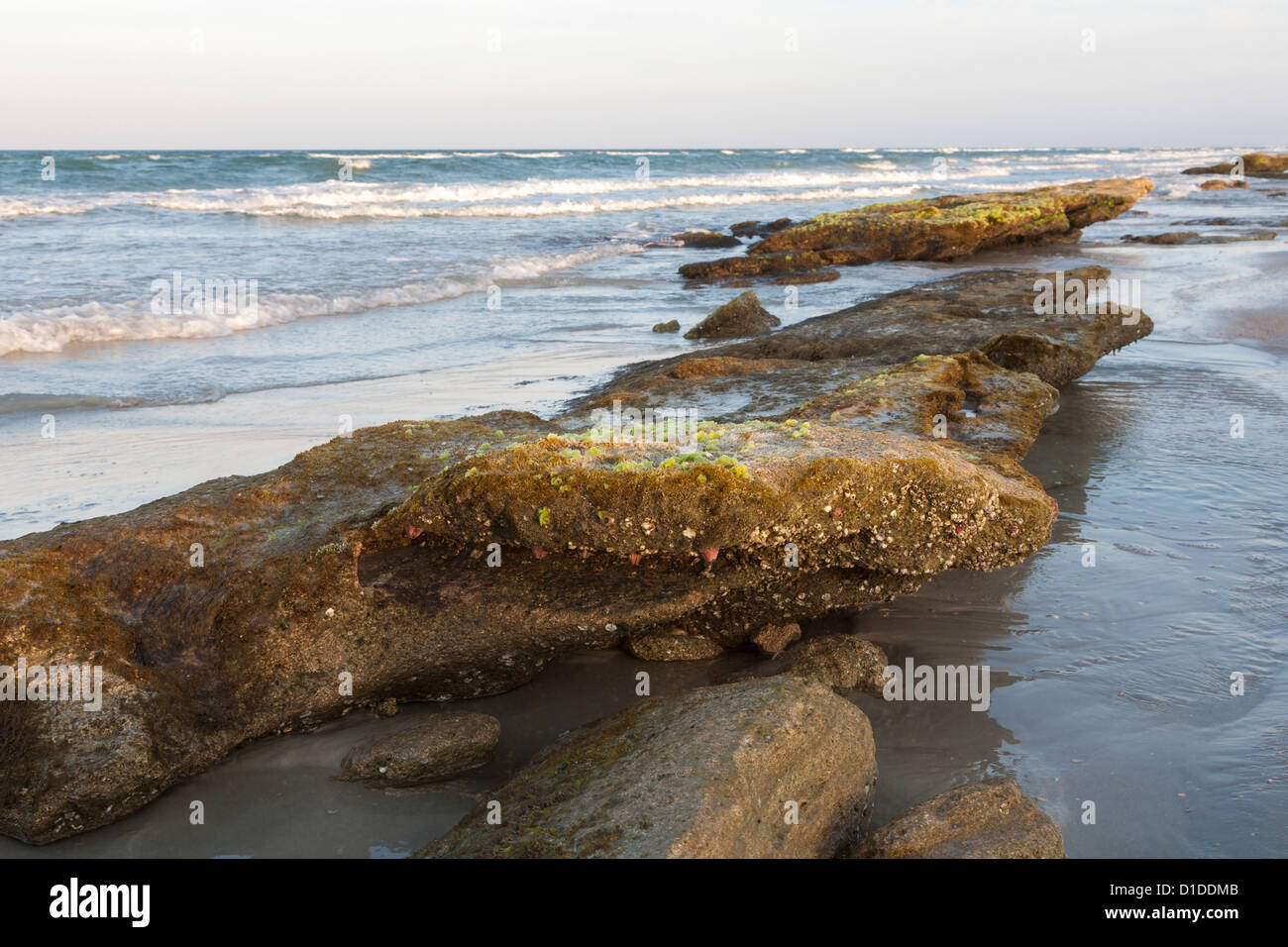 Coquina rock formations along coast of Atlantic Ocean at Washington Oaks Gardens State Park in Florida, USA - Stock Image