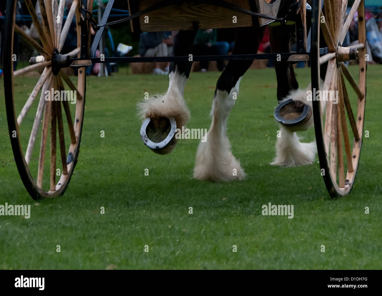 Hooves of a horse pulling a trap - Stock Image