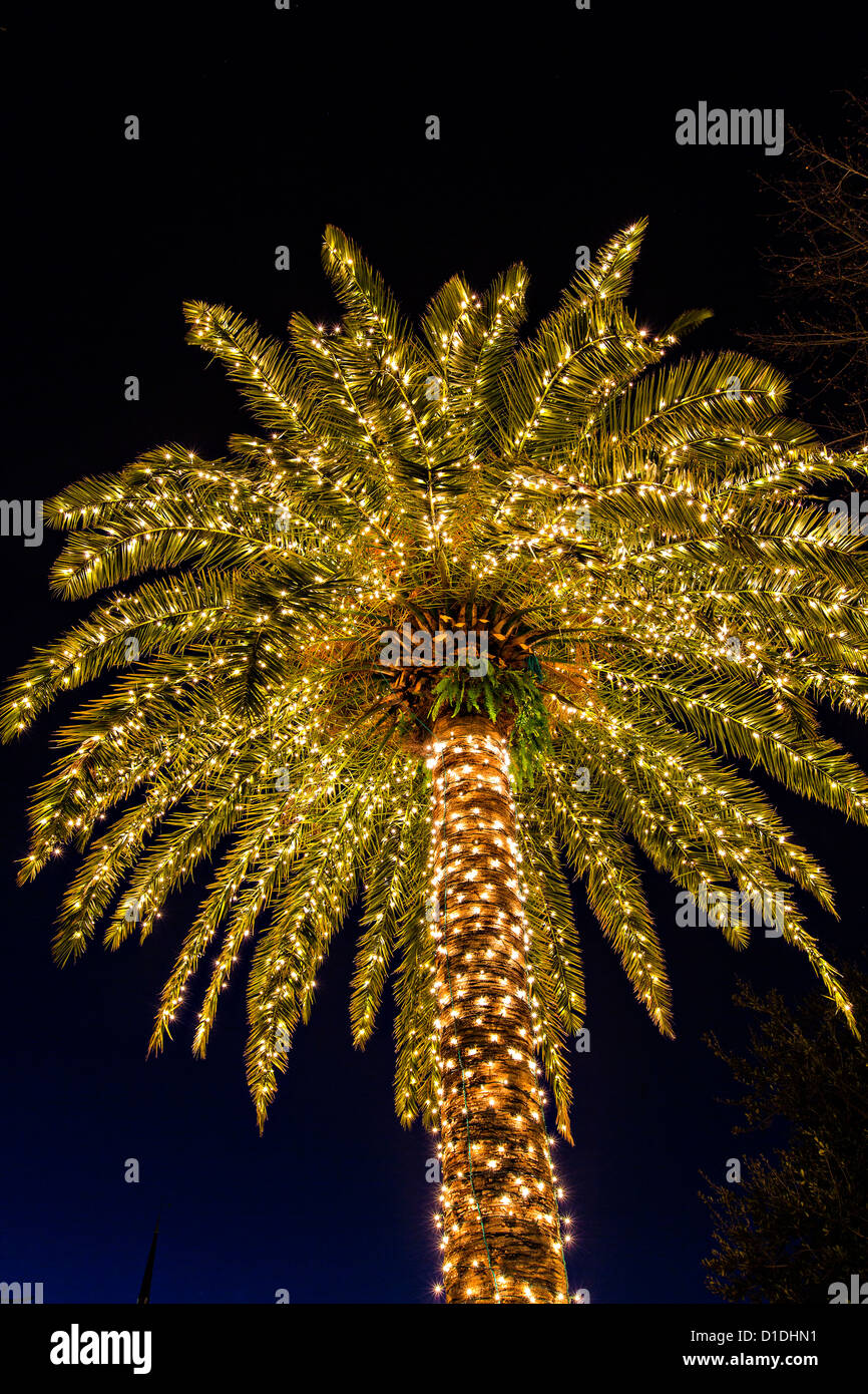 Palm Tree Covered In Fairy Lights For Christmas In