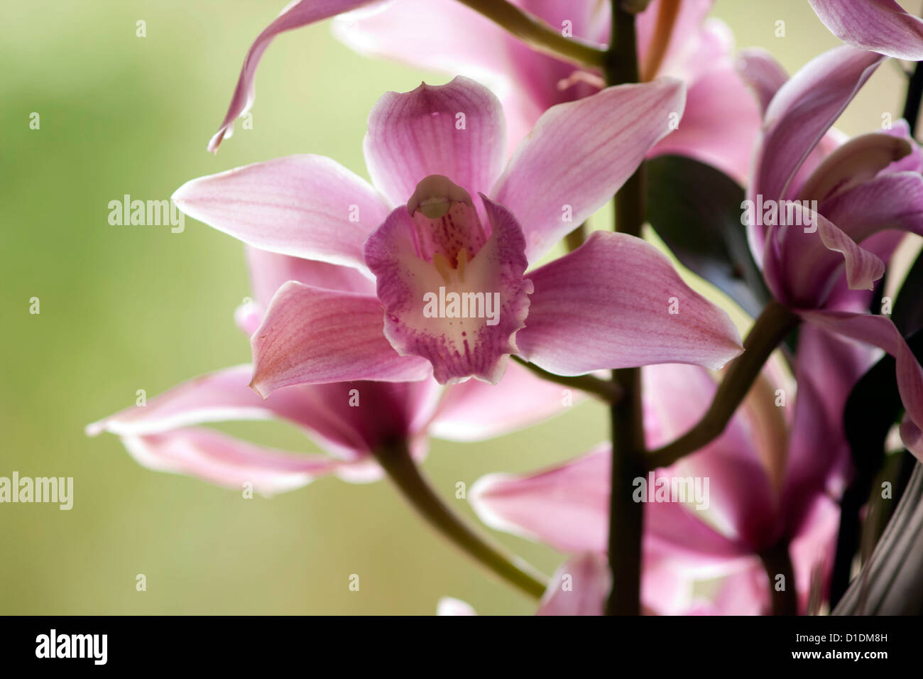 Bunch of pink flowers. Colorful flowers bring breath of freshness in a house or an office Stock Photo