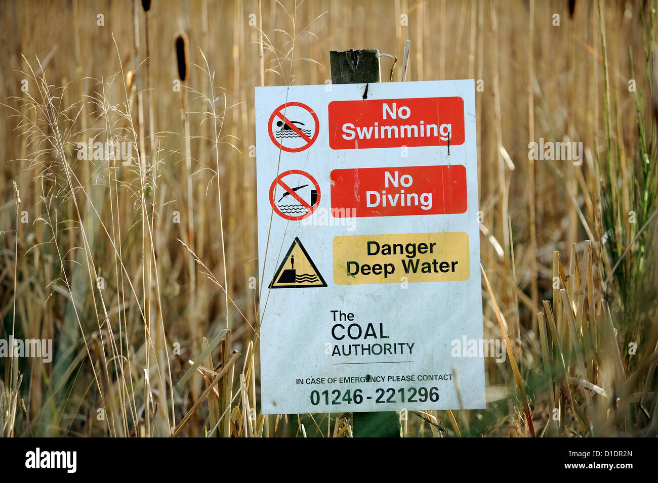 Warning sign, no swimming, no diving and deep water. An old coal discharge pond  now covered with reeds and other - Stock Image