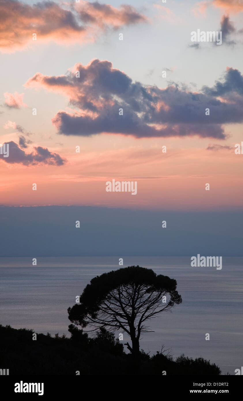 Aleppo pine (Pinus halepensis) after sunset at the Pagasitc Gulf (Pelion, Thessaly, Greece) - Stock Image