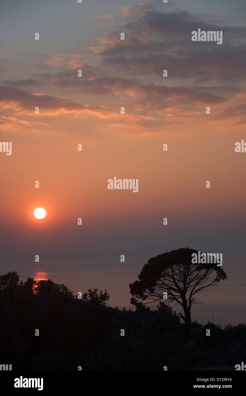 Aleppo pine (Pinus halepensis) at sunset at the Pagasitc Gulf (Pelion, Thessaly, Greece) - Stock Image