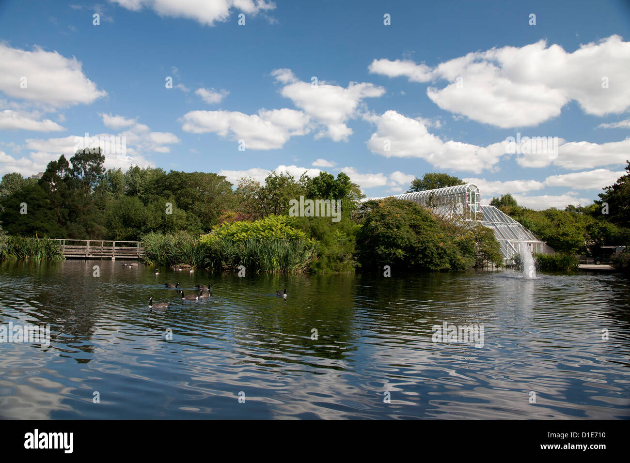 Ducks by fountain and Conservatory on River Thames, Royal Botanic Gardens, Kew, near Richmond, Surrey, England, - Stock Image