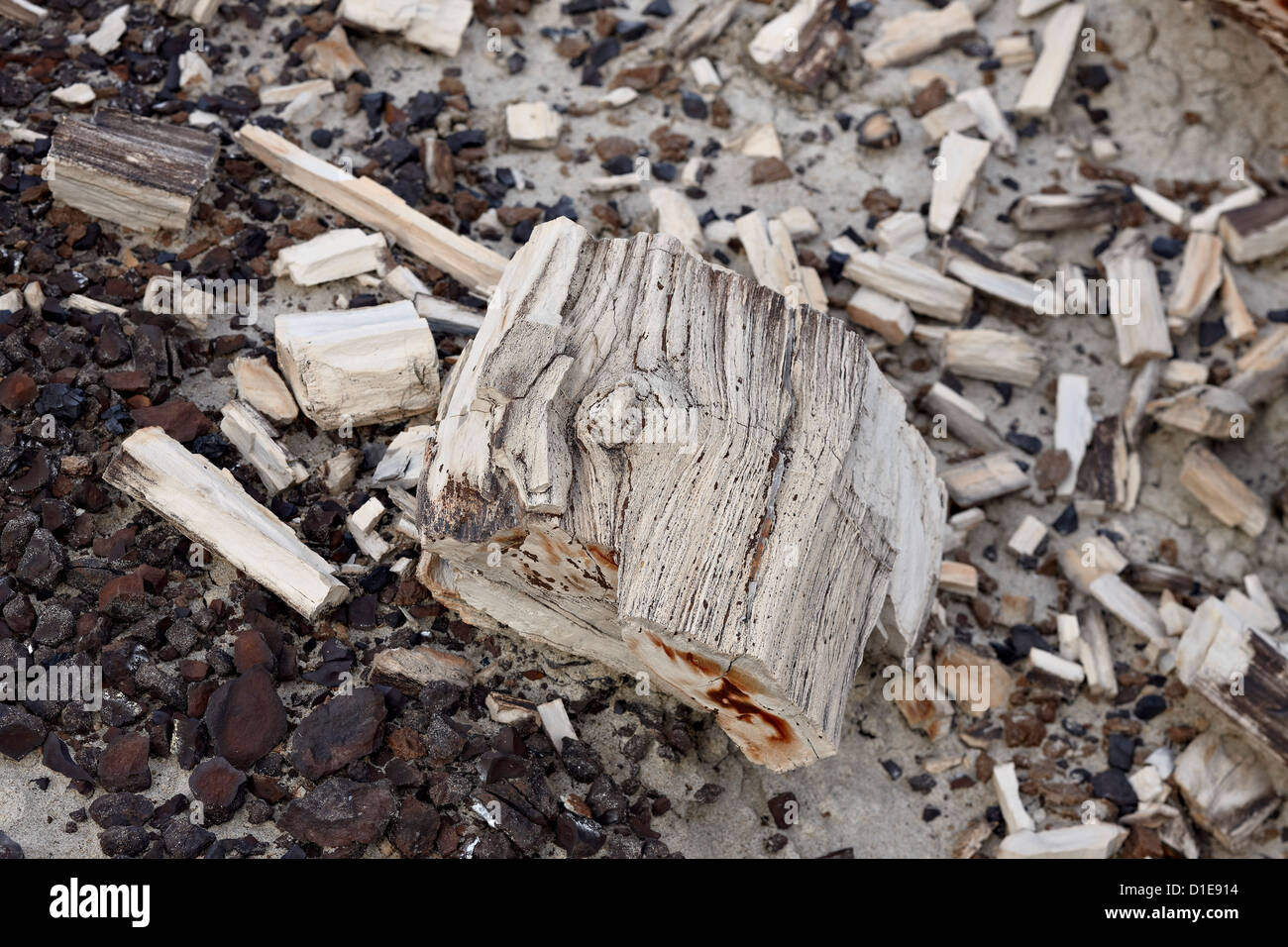 Petrified wood, San Juan Basin, New Mexico, United States of America, North America - Stock Image