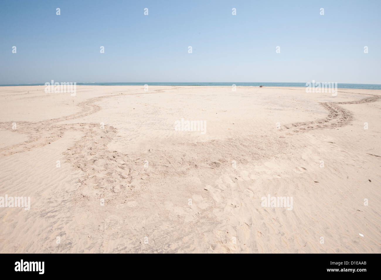 Circular path made by turtle coming up to lay eggs in the sand and returning to the sea, coastal Odisha, Orissa, - Stock Image