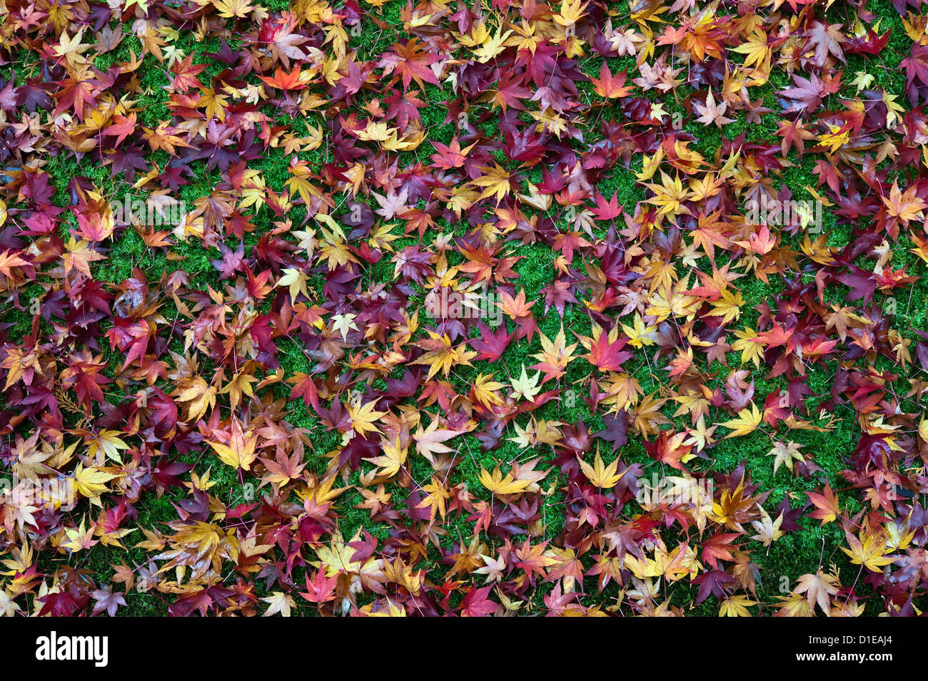 Koto-in zen temple, Daitoku-ji, Kyoto, Japan. Maple leaves cover the mossy ground in autumn - Stock Image