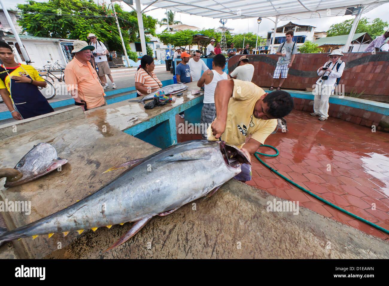 Local fish market puerto ayora santa cruz island for Local fish market