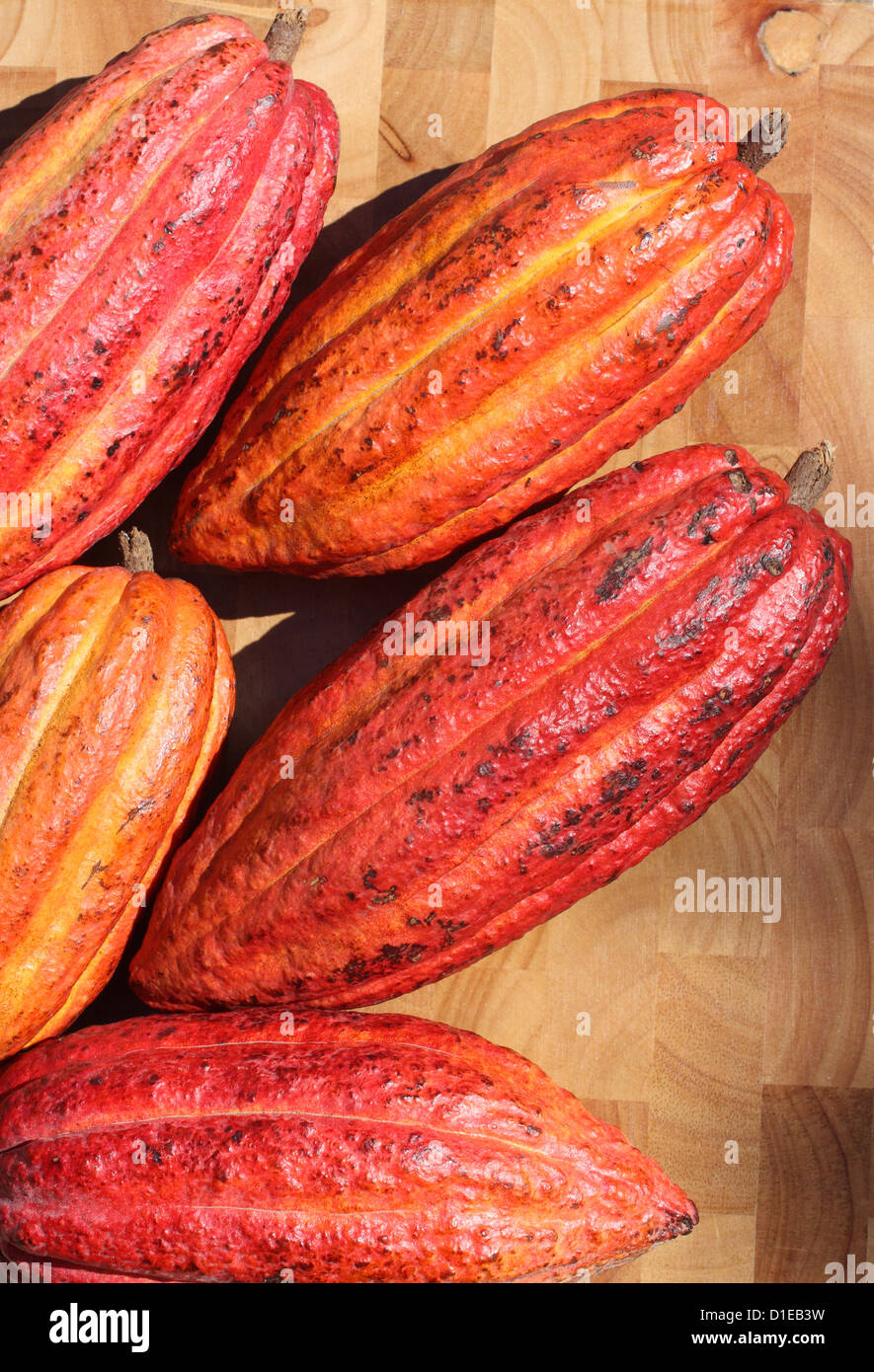 Grenada. Close-up of ripe Cacao (Cocoa) fruits. - Stock Image