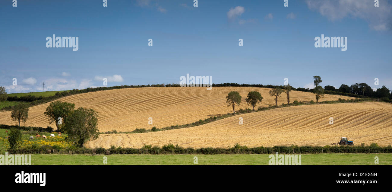 Panoramic image of saving hay in Co. Monaghan, Ireland - Stock Image