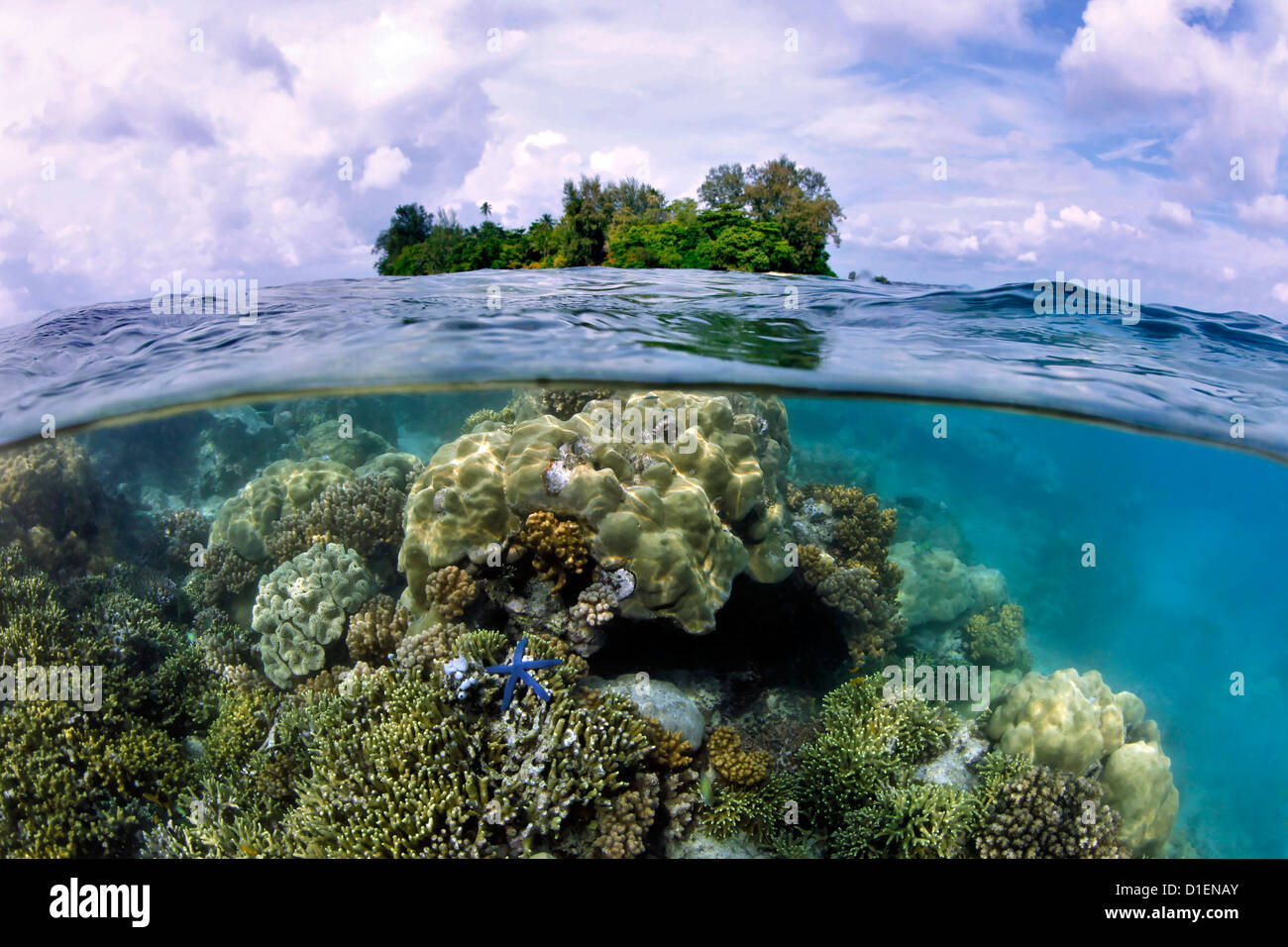 Hard corals, seastar and Lissenung Island, Papua New Guinea - Stock Image