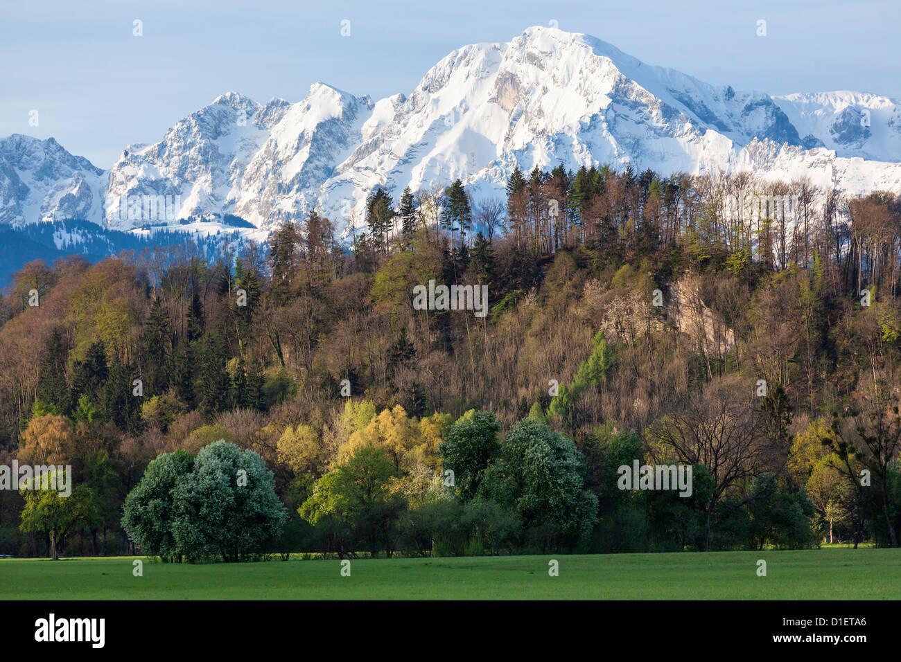 View above the Hellbrunner Berg to Hoher Goell, Berchtesgaden Alps Stock Photo